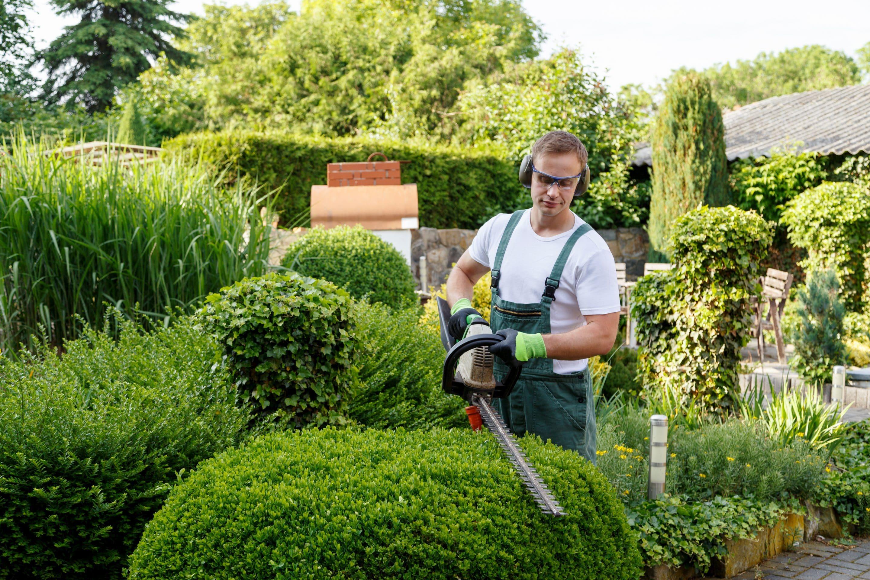 tonte de haie par un jardinier